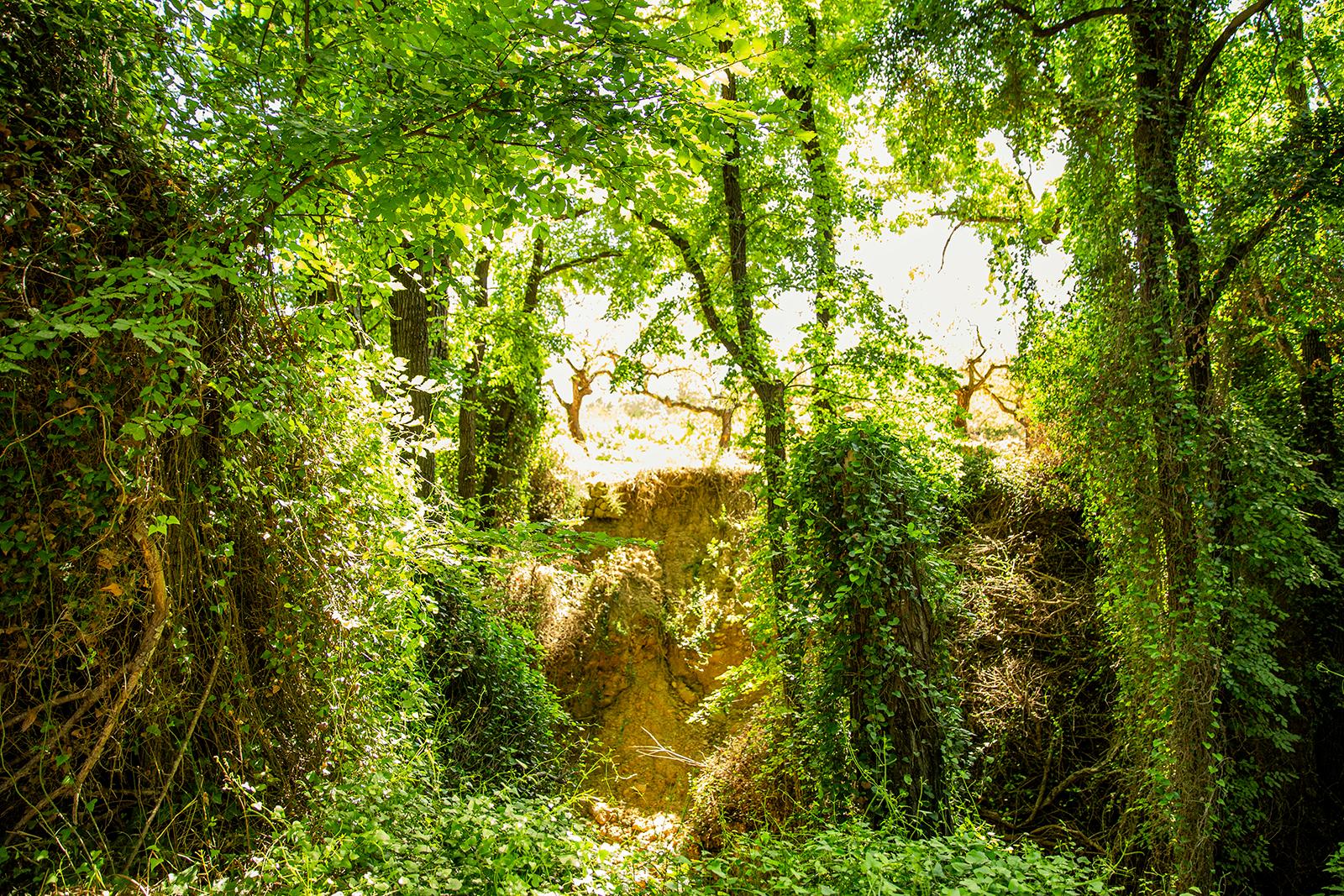 Parage Natural l'Albereda
